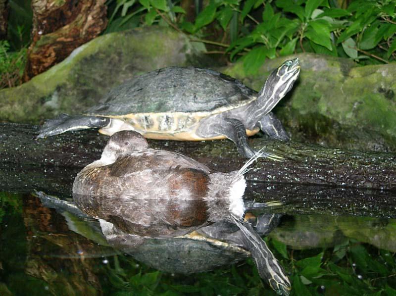 Suzy Solar - Summer - 2005 / Tampa Aquarium - turtle